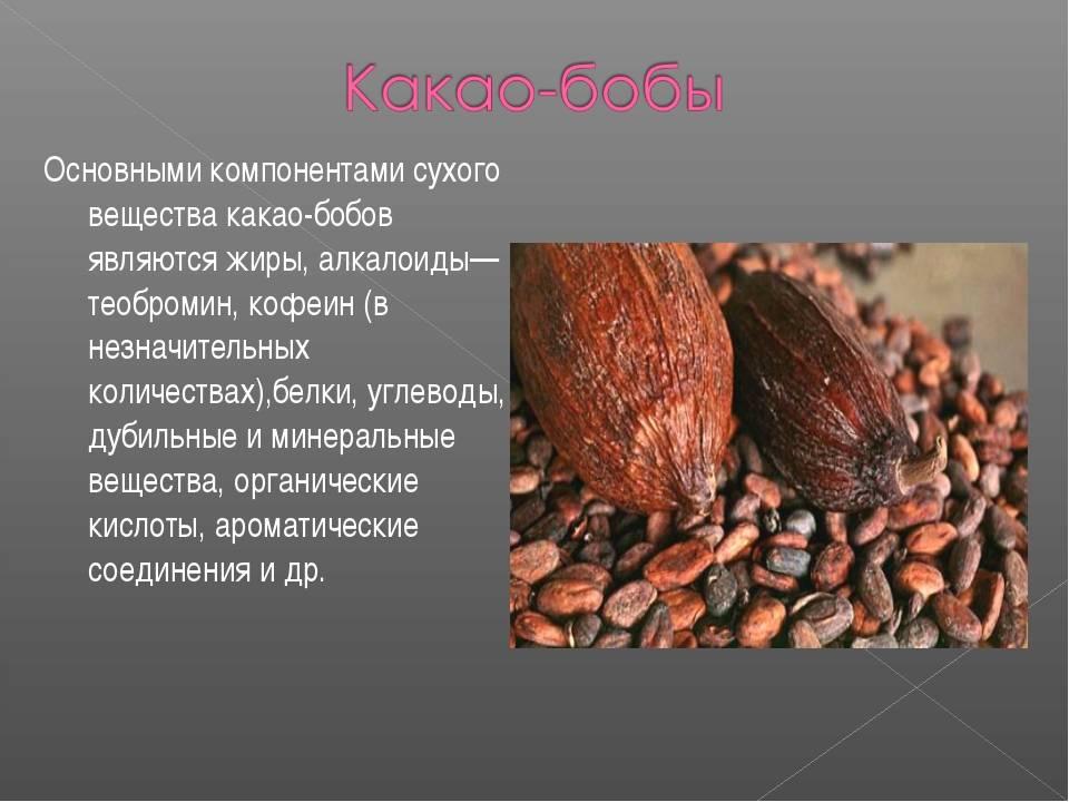 Всё о какао-бобах: описание, химический состав, польза и вред, рецепты блюд