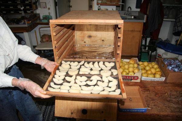 Сохраняем фрукты на зиму: как сушить груши на солнце правильно?