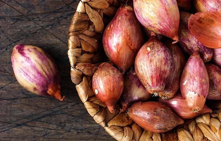 Что такое лук-шалот — польза и вред для здоровья человека