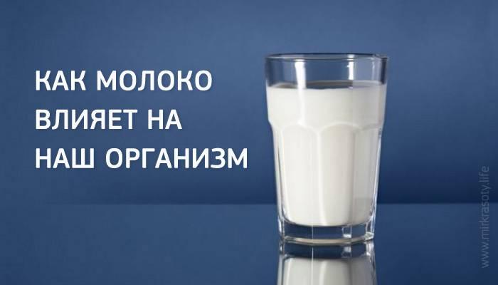 Молоко — польза и вред для здоровья организма