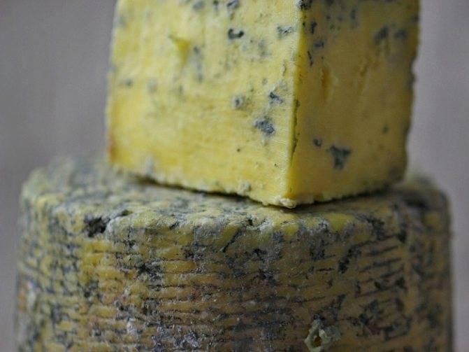 Сорта сыра с плесенью. виды, особенности и вкусовые характеристики