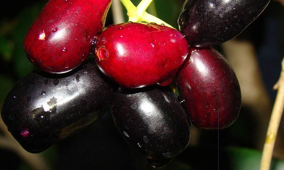 Масличная пальма, джамболан, атемойя, ши: самые удивительные фрукты со всего мира