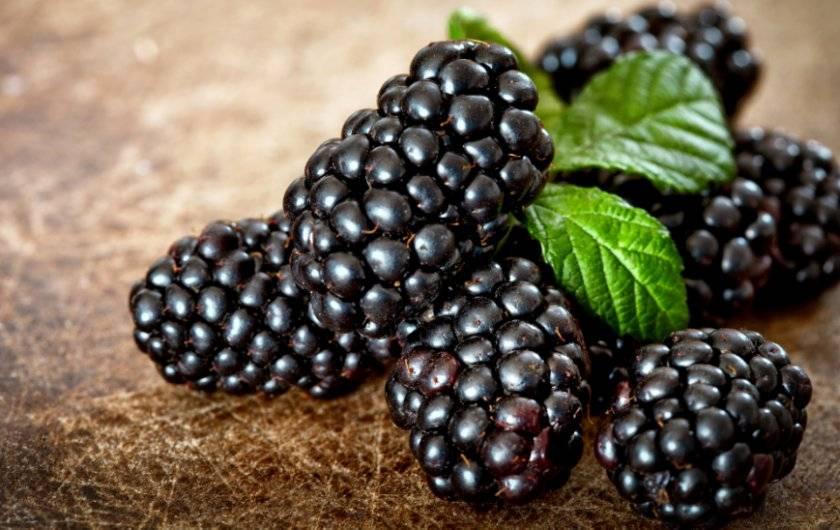 Шелковица: польза и вред для здоровья