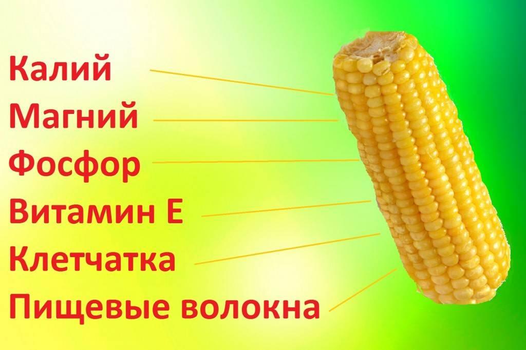Сколько калорий в вареной кукурузе, польза и вред, рецепты