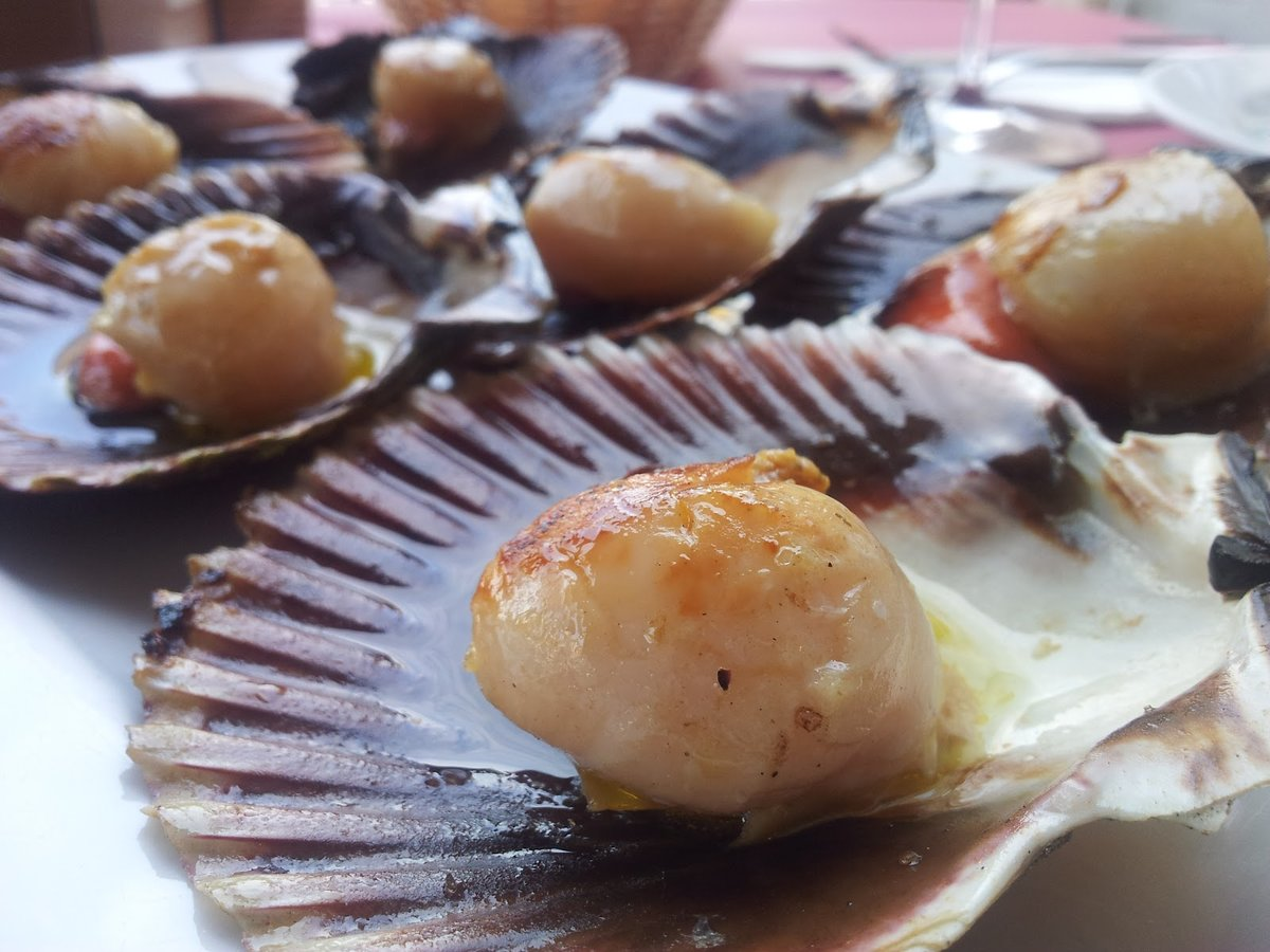 Морские гребешки: польза и вред