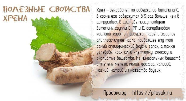 Польза и вред листьев и корня хрена, лечебные свойства и противопоказания