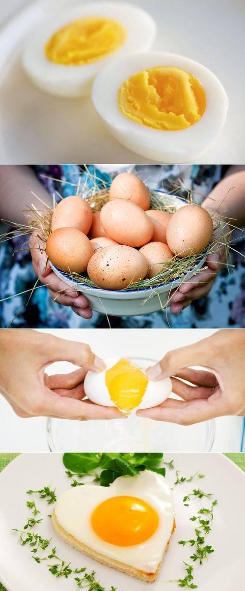 Вареные яйца польза и вред
