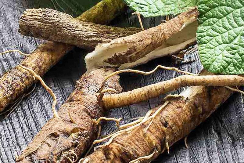 Корни лопуха. лечебные свойства, рецепты применения и противопоказания