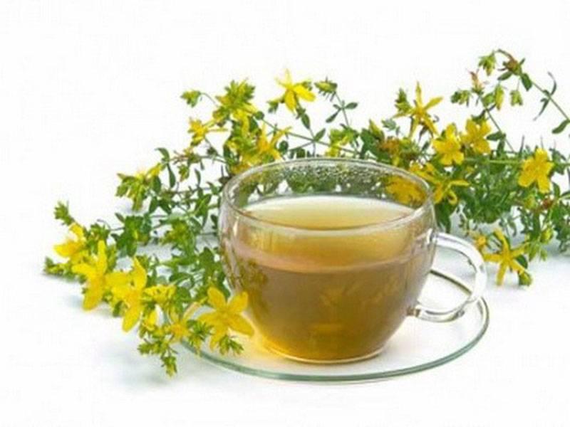 Чай из зверобоя: польза и вред, способы приготовления