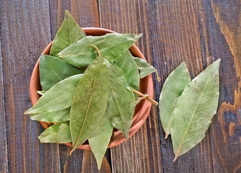 Лавровый лист для лечения и похудения. рецепты, выращивание и магические ритуалы