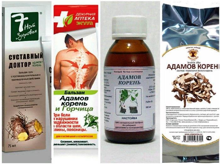 Адамов корень и применение в его в народной медицине