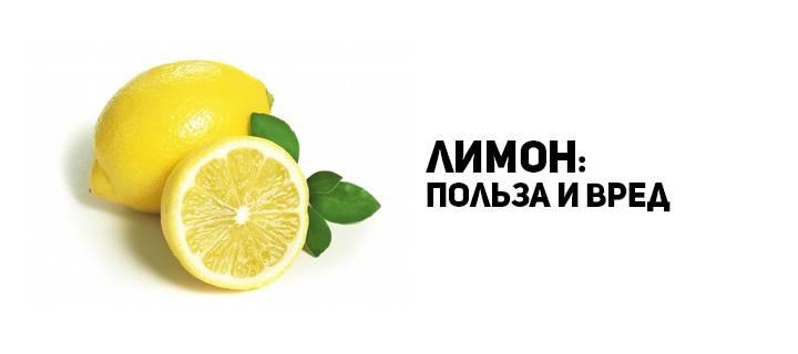 Лимонник китайский: полезные свойства, противопоказания, фото, применение