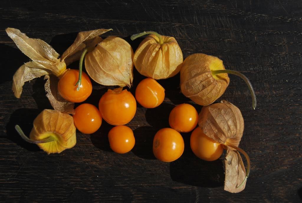 Физалис цукаты польза и вред. польза физалиса для пищеварения. физалис – вред и противопоказания