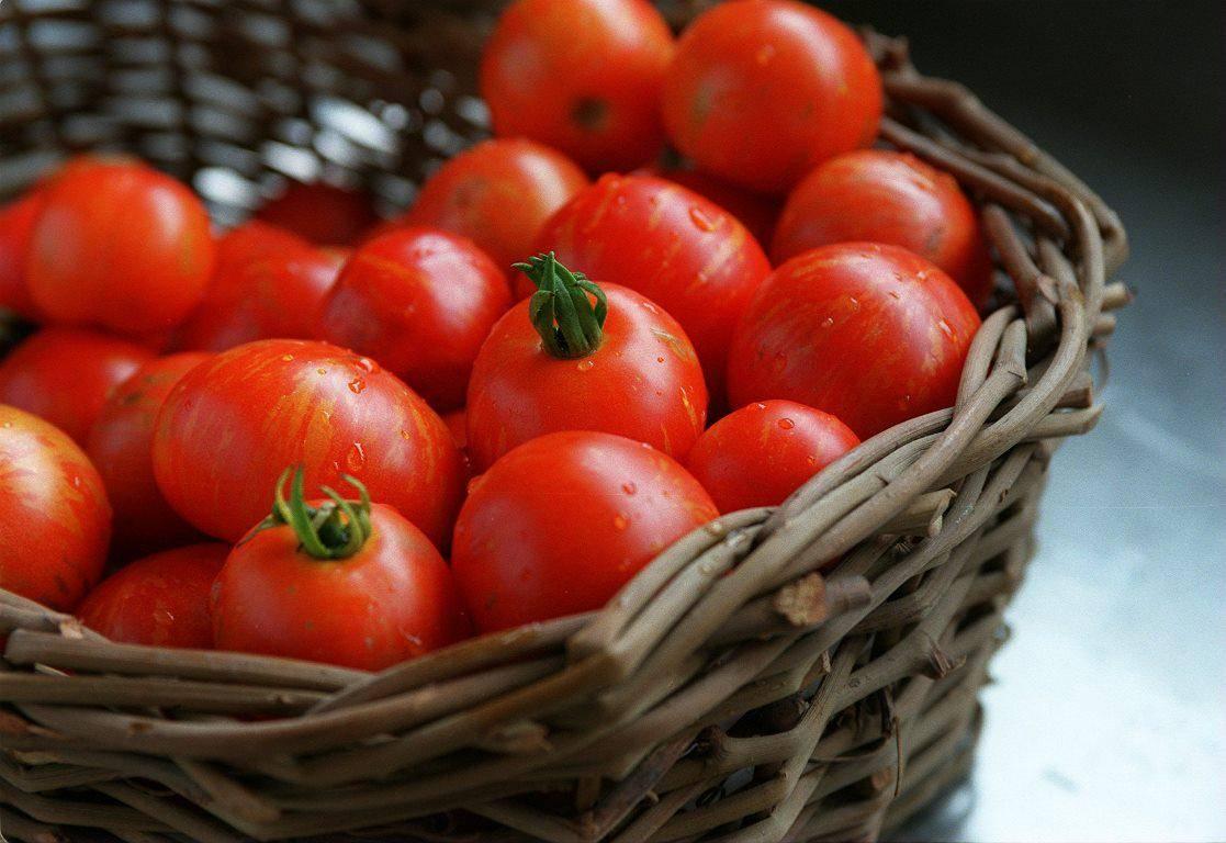 Можно ли кушать помидоры при беременности?