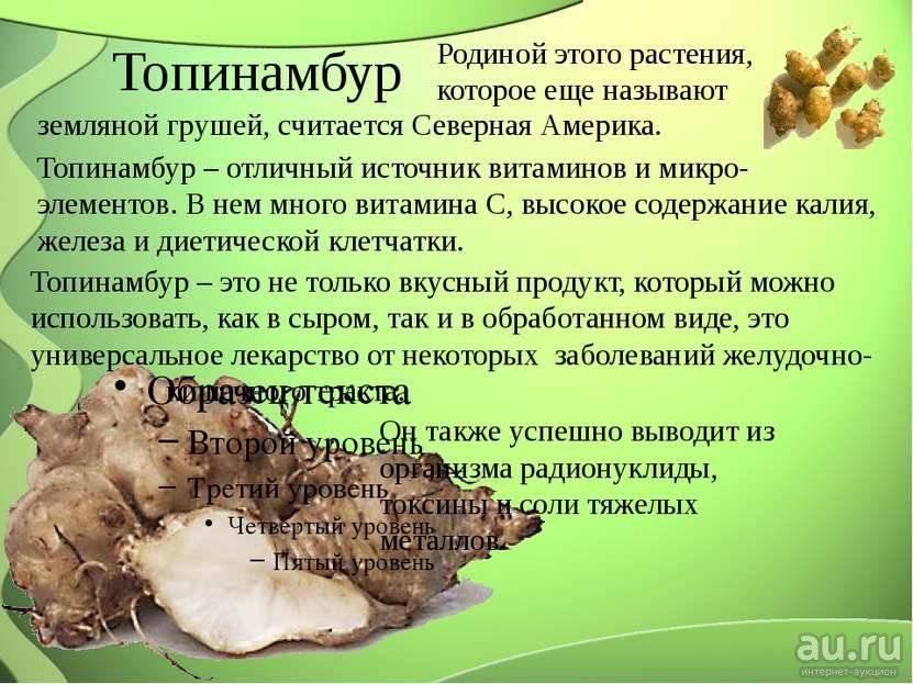 Топинамбур: польза и вред для организма