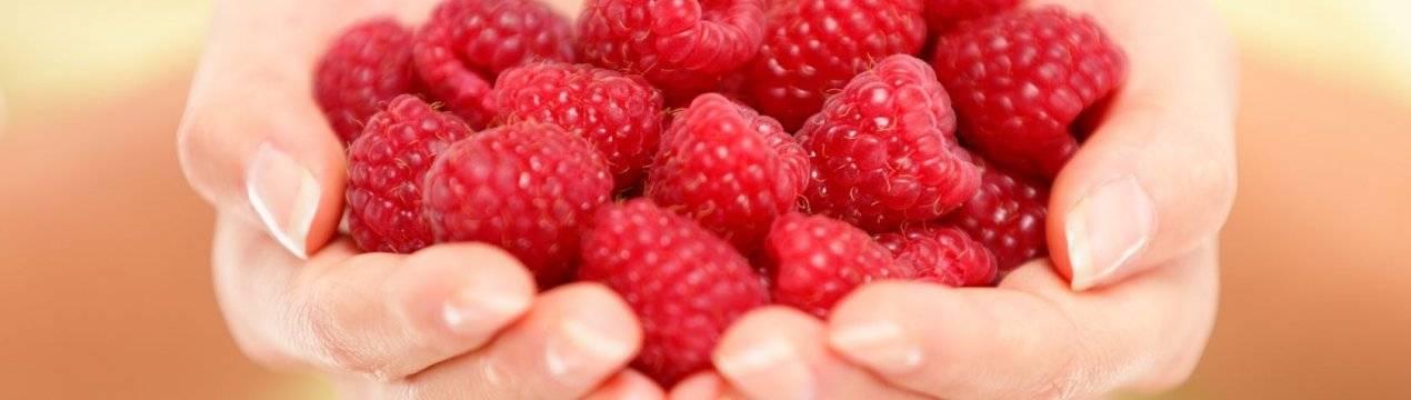 Польза и вред малины для здоровья организма