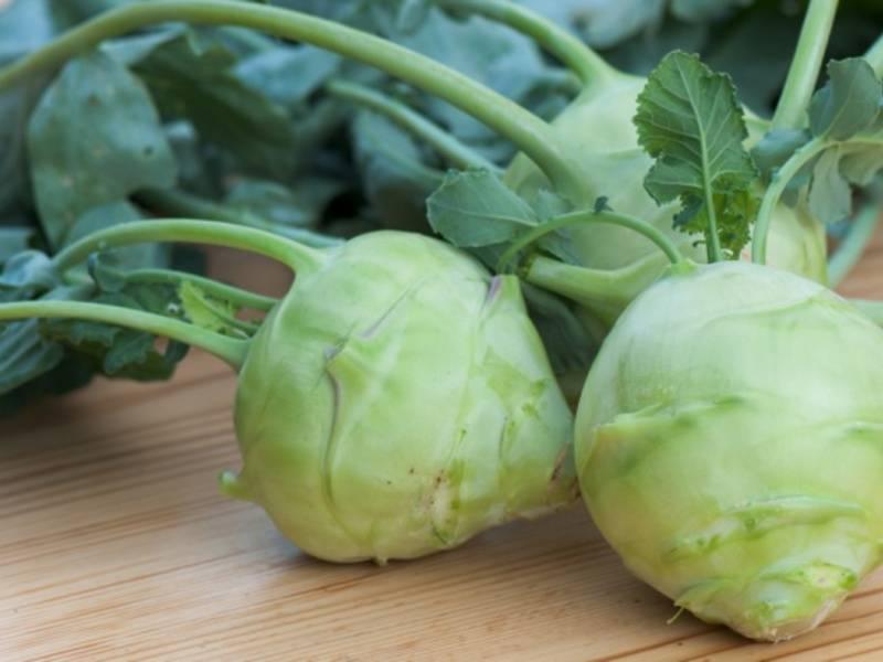 Капуста кольраби и ее польза и вред для организма человека, рецепты приготовления