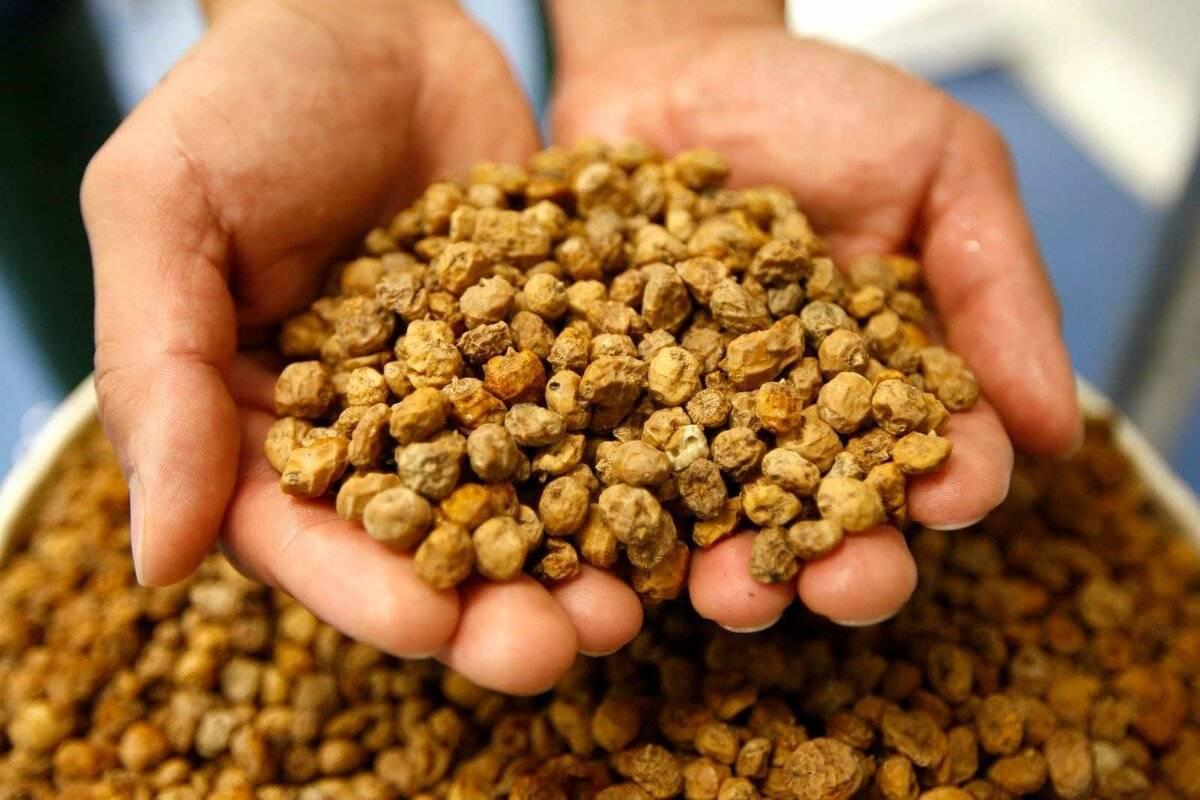 Чуфа — земляной миндаль: для тех, кто любит полезные орешки