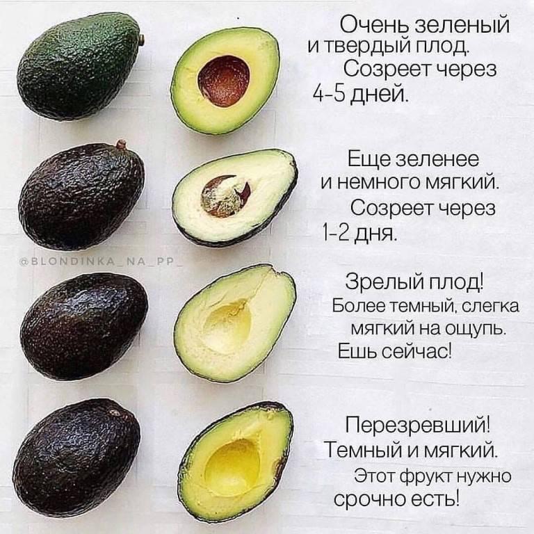 Авокадо: как выглядит, как выбрать спелый плод? какого цвета должен быть спелый авокадо