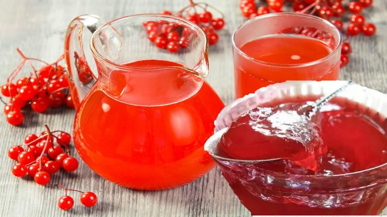Калина: польза и вред для здоровья, для организма, рецепты