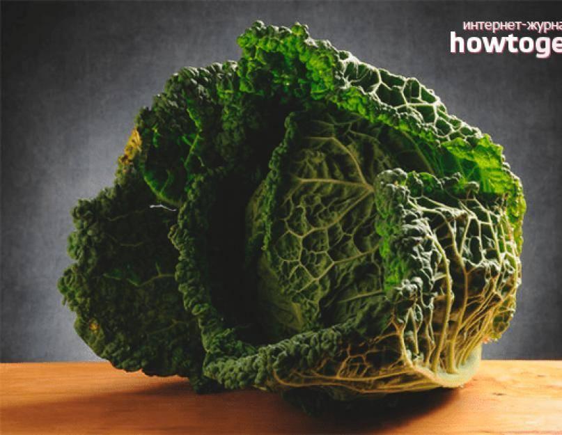 Польза и вред савойской капусты. рецепты ее приготовления