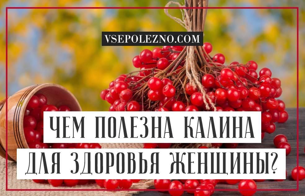 Калина красная: польза и вред для здоровья