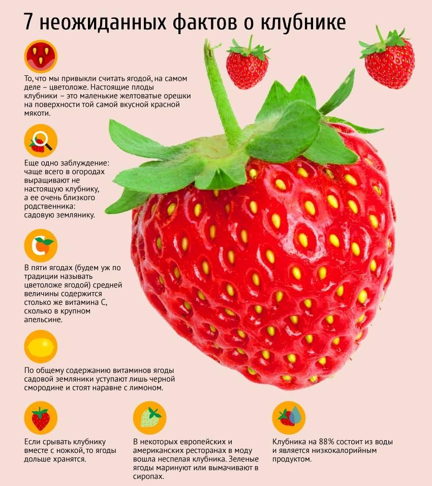 9 полезных свойств клубники для здоровья по мнению учёных