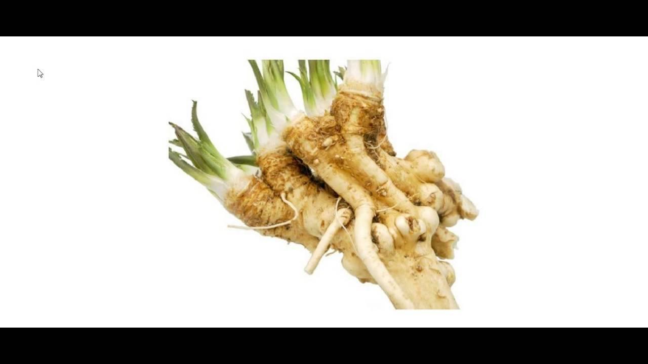 Как приготовить хрен в домашних условиях — рецепты и питательные свойства корней хрена