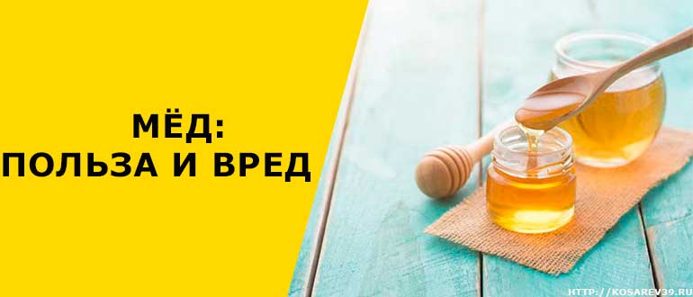 Мёд — польза и вред для здоровья организма