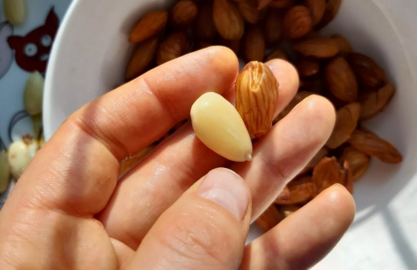 Как правильно очистить грецкий орех: 6 способов быстро расколоть скорлупу