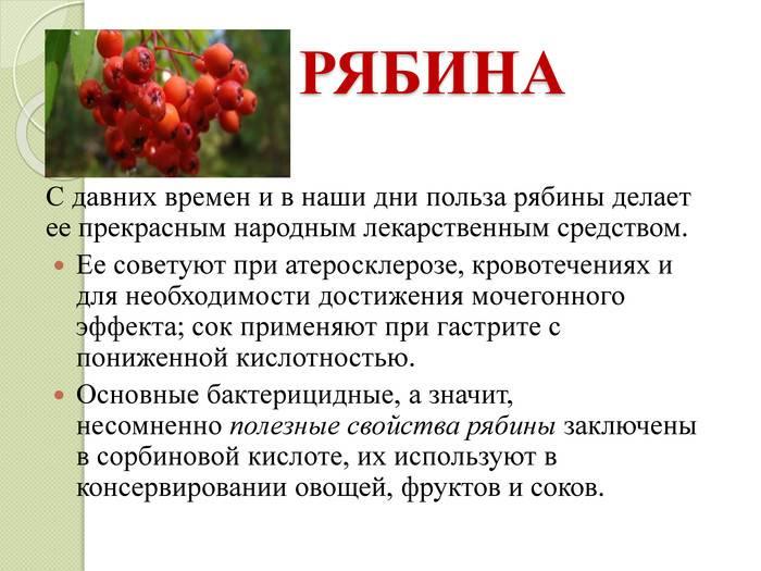 Рябина красная: полезные свойства, противопоказания, польза и вред