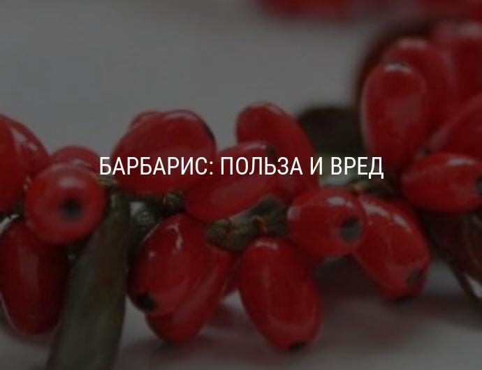 Листья, корень, плоды барбариса — лечебные свойства, вред, применение