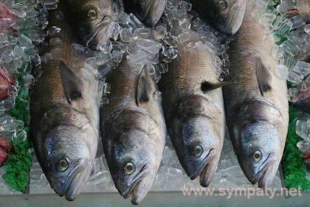 Рыба пеленгас польза и вред