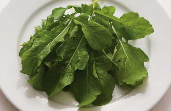 Салат рукола польза и вред