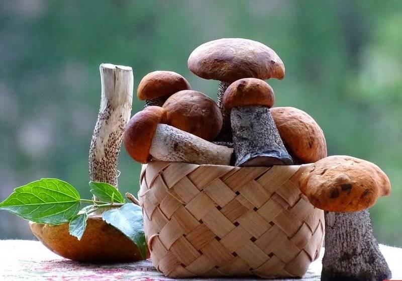 Белый гриб: польза и вред