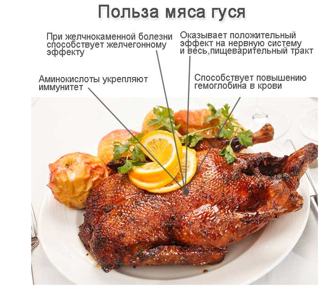 «редкий гость на столе» — гусиное мясо: расскажем все о пользе и вреде продукта