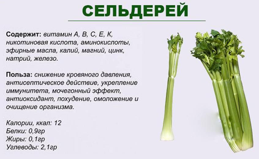 Сельдерей: полезные свойства для организма и противопоказания
