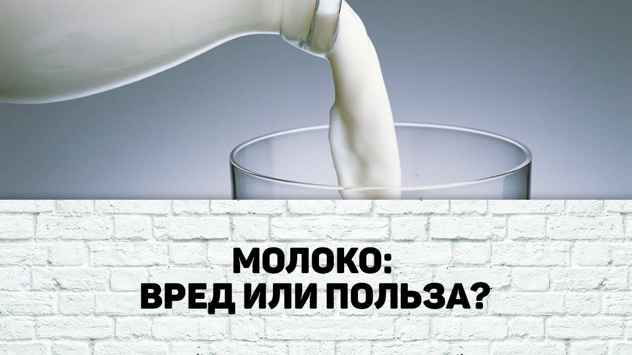 Молоко польза и вред для организма взрослого
