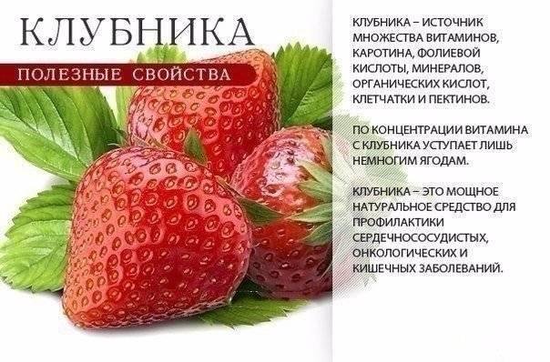 Клубника во время беременности: можно ли включать ягоду в меню в 1 или 2 триместре, разрешена ли она на поздних сроках?