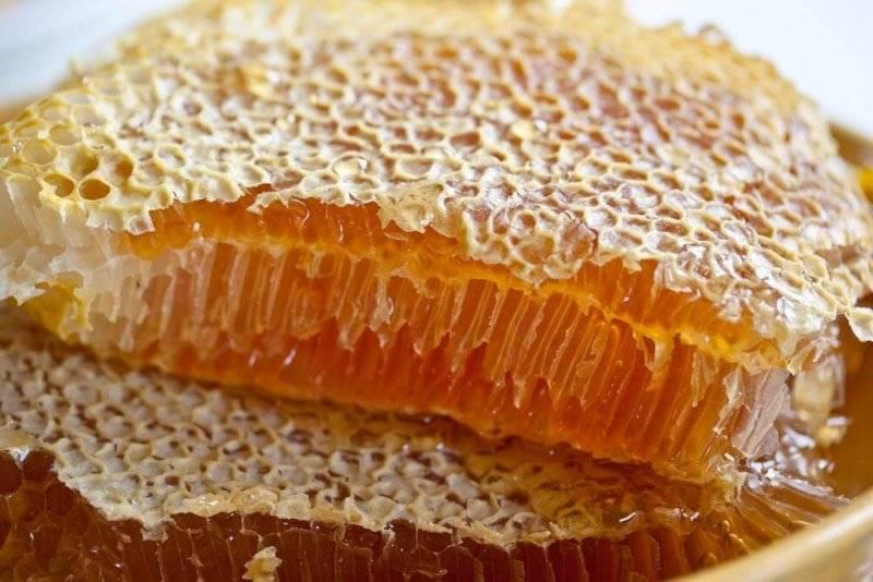 Польза и вред пчелиного меда в сотах для человеческого организма, советы, как правильно их использовать