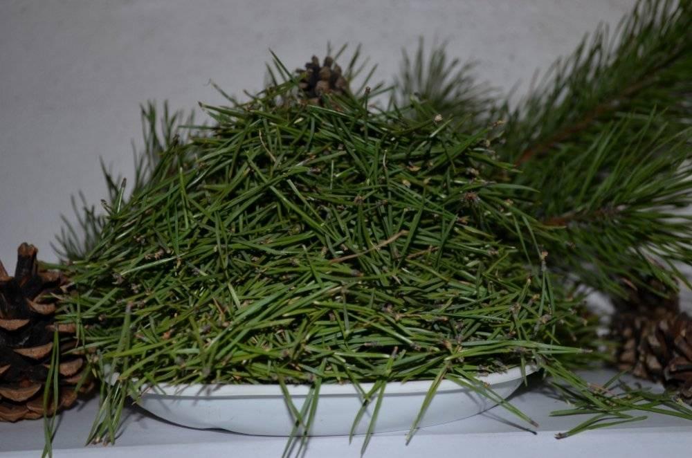Лечебные свойства и польза сосновых иголок, противопоказания