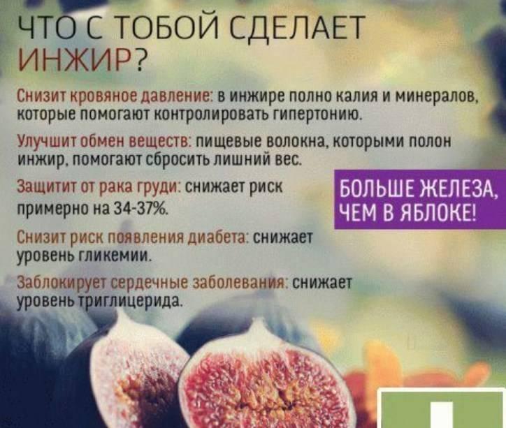 Инжир — польза и вред для организма