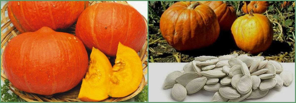 Тыква: состав, полезные свойства, польза и вред, лечение тыквой