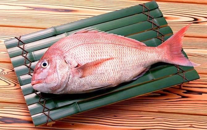 Морской окунь польза и вред для организма