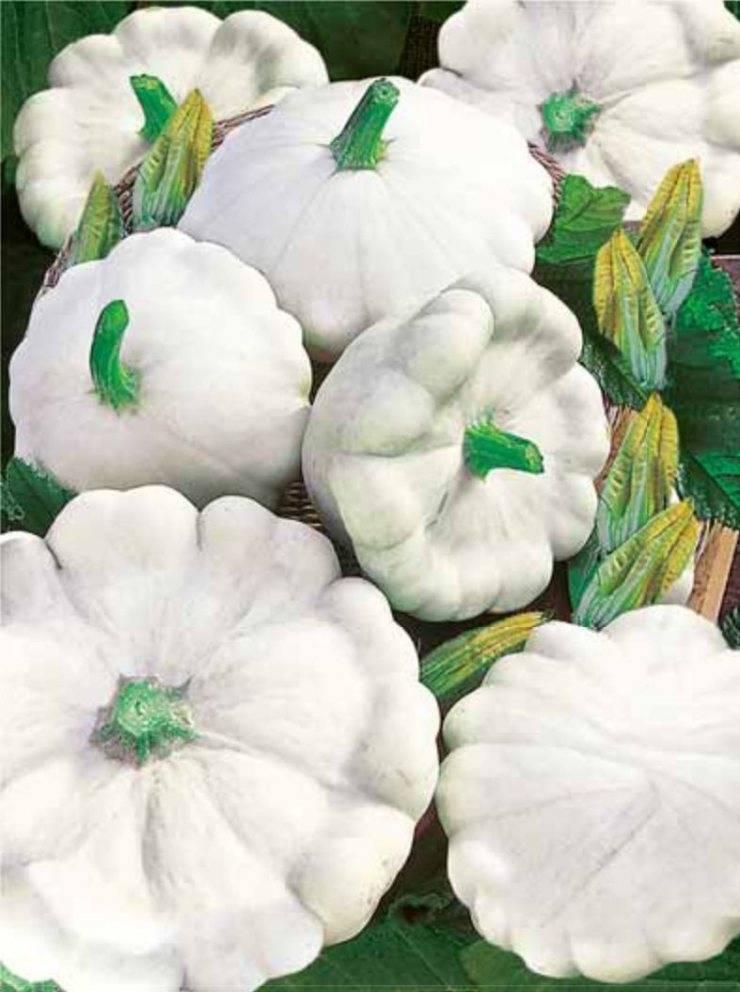 Чем полезен патиссон, состав и свойства тарельчатой тыквы