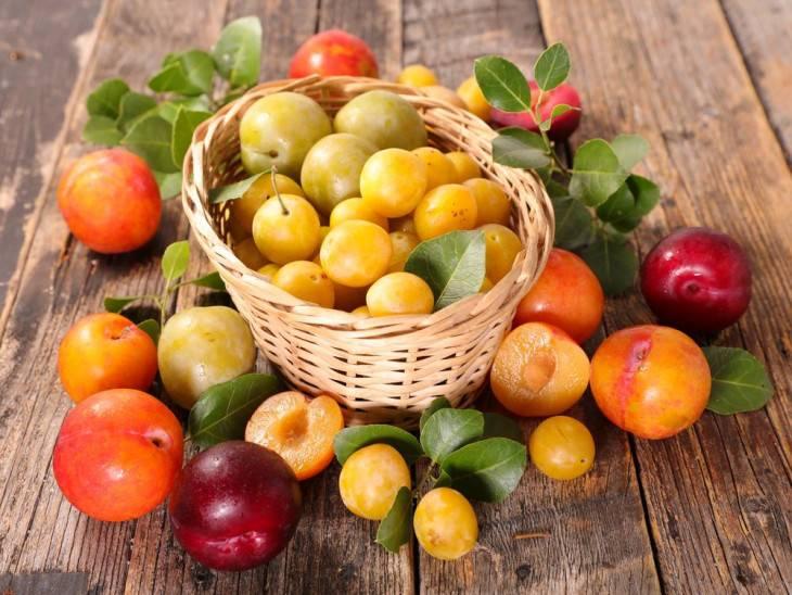 Слива — в чем польза и возможный вред фрукта для здоровья