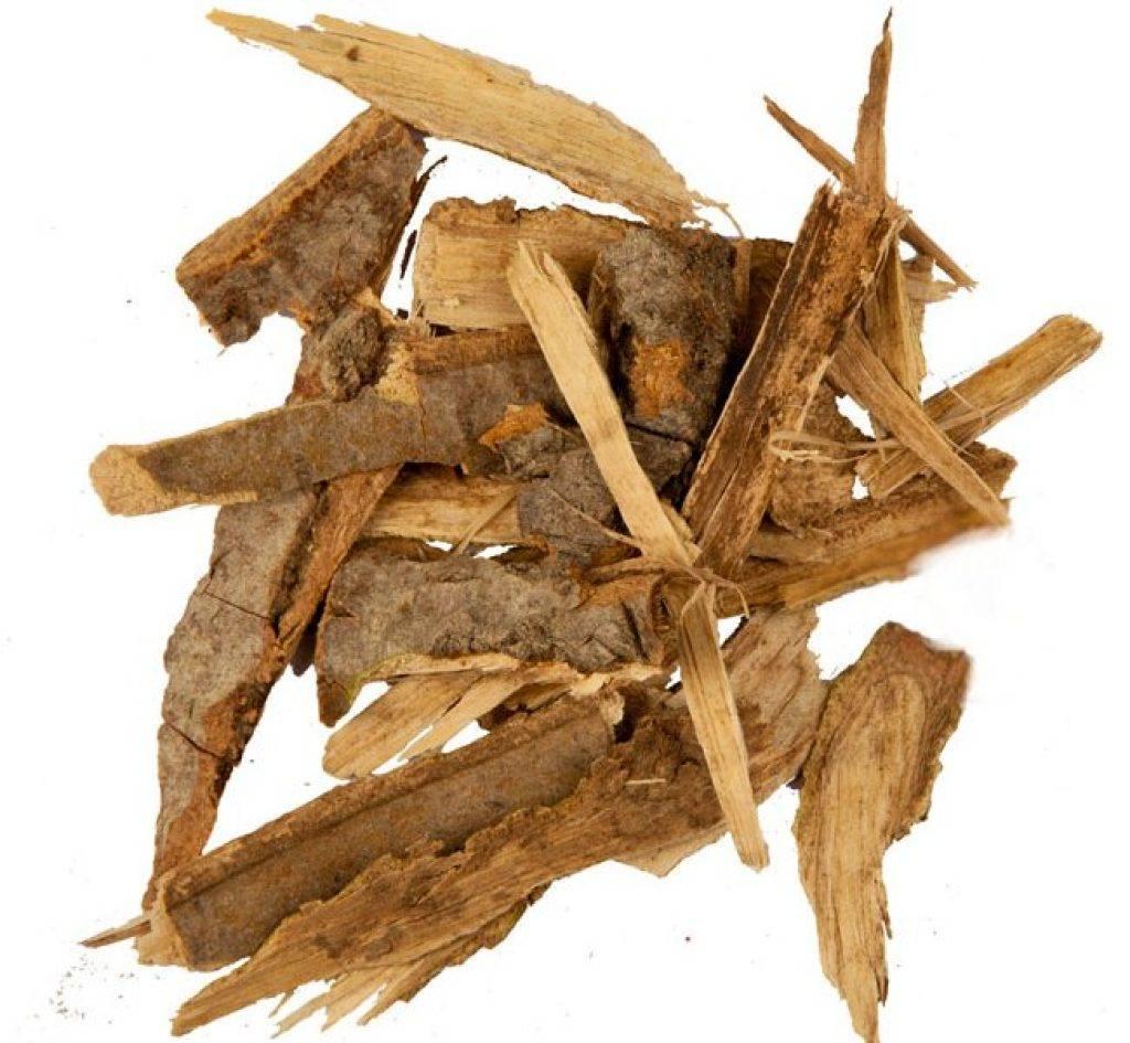 Чем полезна кора осины и как ее применяют для лечения заболеваний? рецепты народной медицины