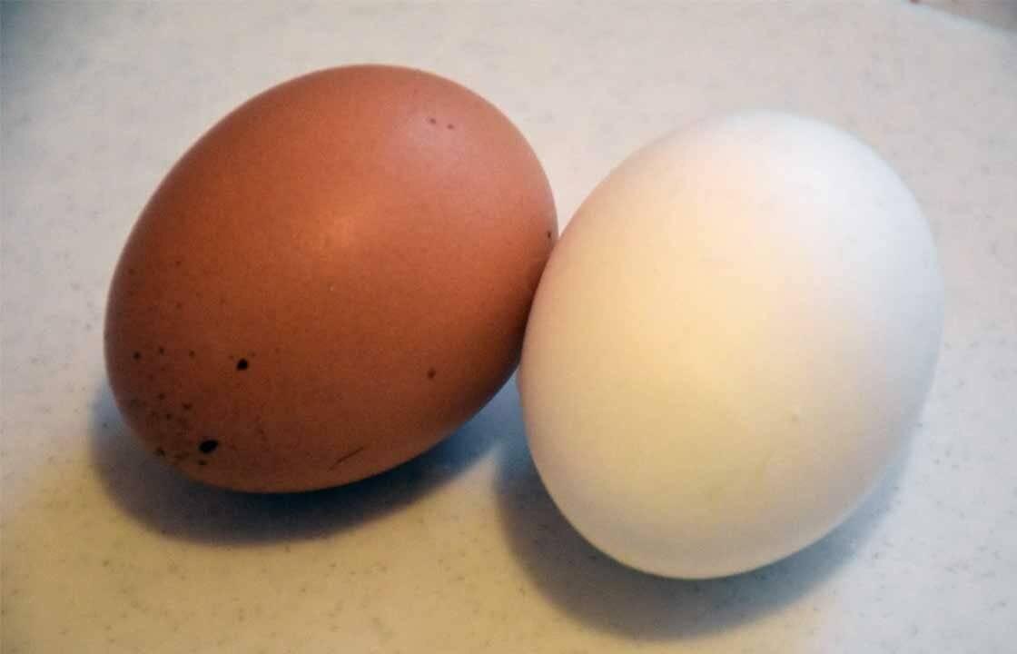 Почему одни куриные яйца коричневые, а другие белые? описание, фото и видео