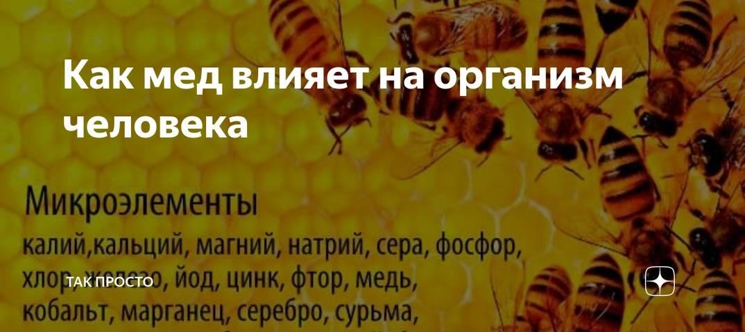 Польза меда для организма человека