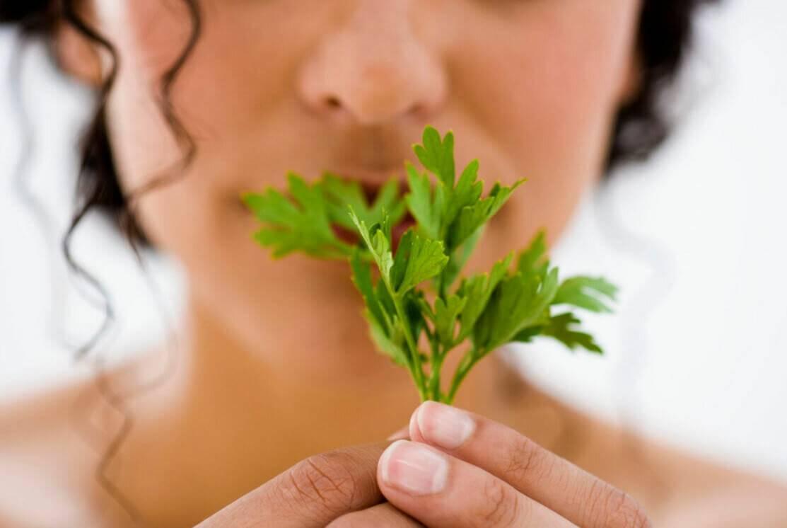 Можно ли во время беременности употреблять петрушку на ранних и поздних сроках: польза и вред зелени
